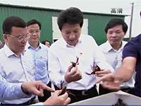 全市稻虾综合种养产业发展现场会在桂平市召开 何录春出席并讲话 蓝晓梁雄出席